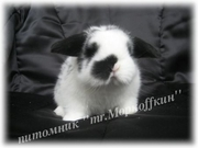 Карликовые Кролики из Питомника ''mr.Моркoffкин''