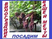 Виноградник вашей мечты у вас во дворе частного дома, на дачном участке